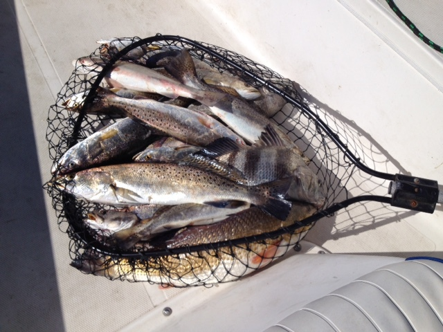 galveston bay fishing best galveston trout fishing guide fish red kemah tx fishing houston texas best galveston bay trout fishing guide fish red kemah tx texas best
